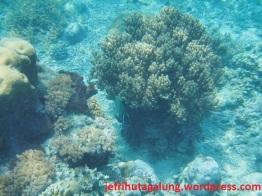 Terumbu Karang Pulau Sangalaki